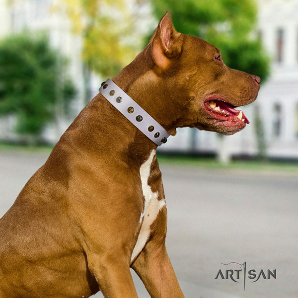 Pitbull convenient genuine leather dog collar with unique adornments