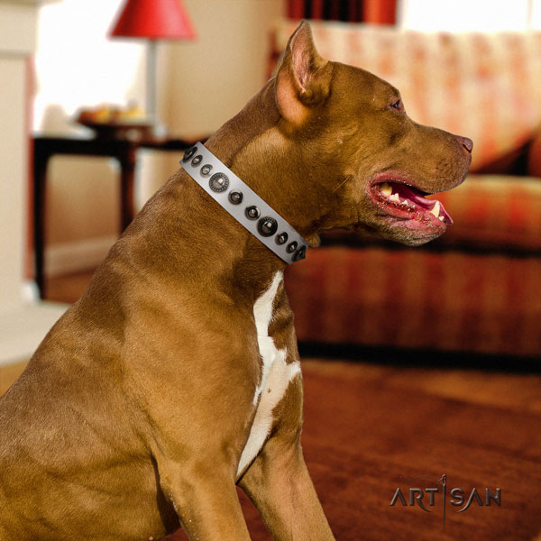 Pitbull handcrafted genuine leather dog collar with remarkable adornments