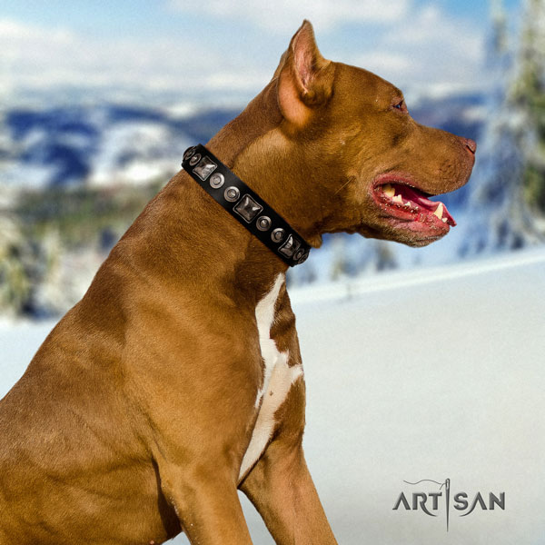 Pitbull comfortable natural genuine leather dog collar with impressive decorations