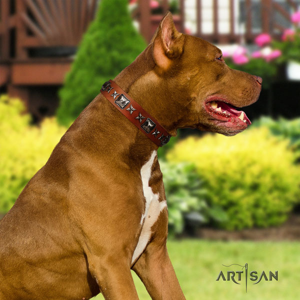 Pitbull easy wearing natural genuine leather dog collar with stylish studs