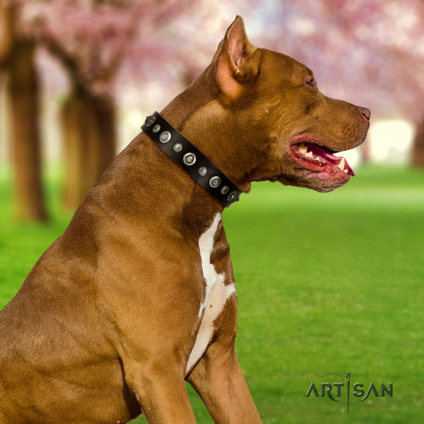 Pitbull handmade full grain leather dog collar with impressive adornments