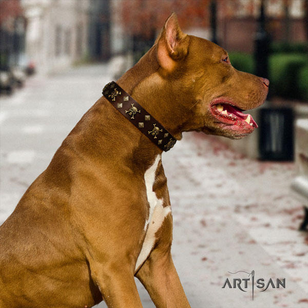 Pitbull fine quality full grain leather dog collar with fashionable adornments