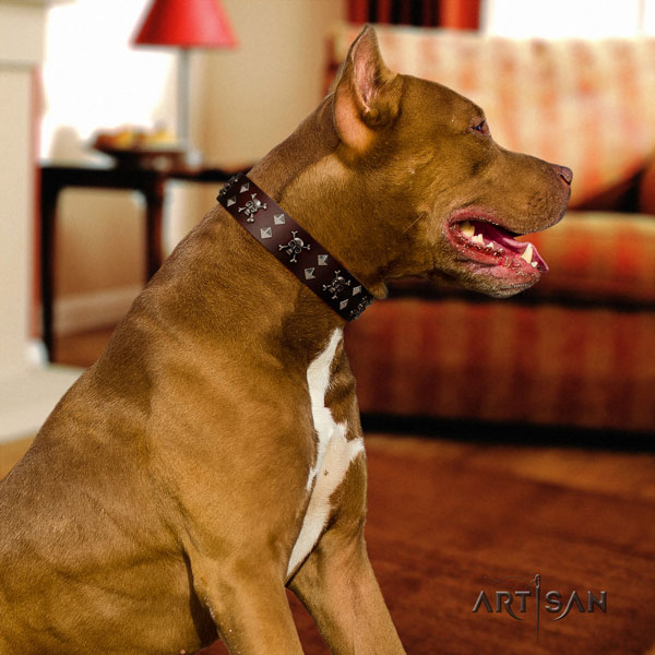 Pitbull easy wearing leather dog collar with designer decorations