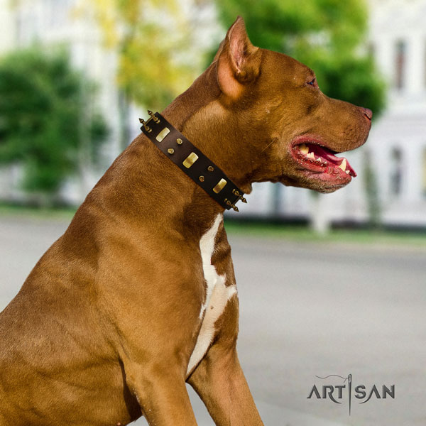 Pitbull easy to adjust full grain leather dog collar with stunning embellishments