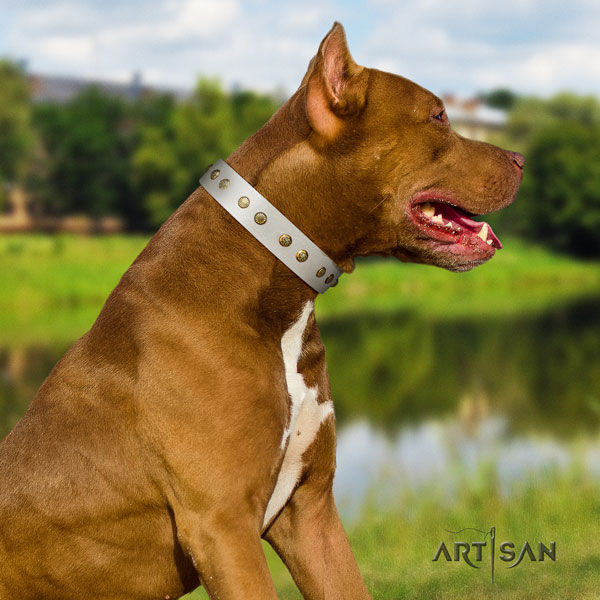 Pitbull adjustable full grain natural leather dog collar with impressive adornments