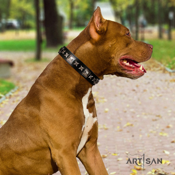 Pitbull adjustable full grain natural leather dog collar with designer adornments