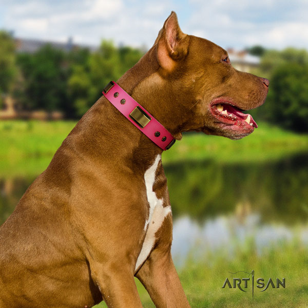 Pitbull adjustable leather dog collar with unusual adornments