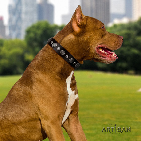 Pitbull handcrafted full grain leather dog collar with exceptional embellishments