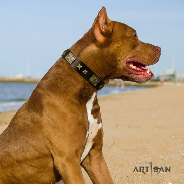 Pitbull comfortable natural genuine leather dog collar with extraordinary studs