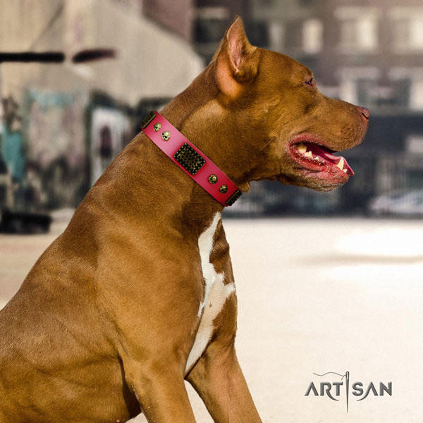 Pitbull handmade genuine leather dog collar with amazing studs