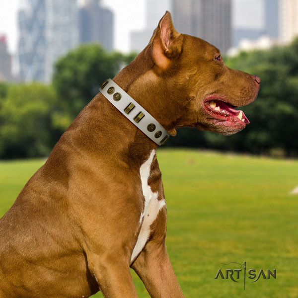 Pitbull fine quality full grain genuine leather dog collar with exquisite embellishments