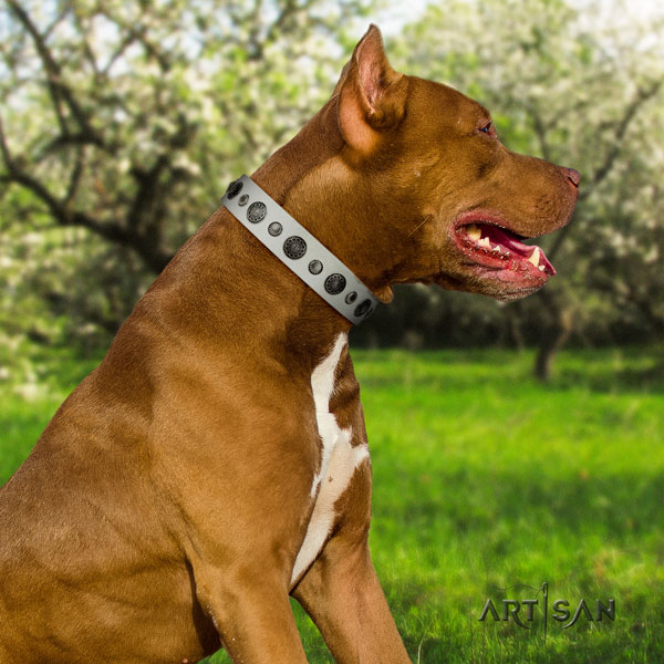 Pitbull convenient leather dog collar with remarkable decorations