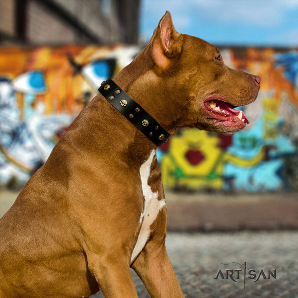 Pitbull easy wearing genuine leather dog collar with significant studs