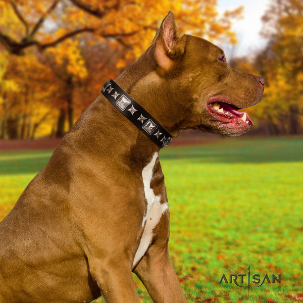 Pitbull convenient full grain genuine leather dog collar with impressive decorations