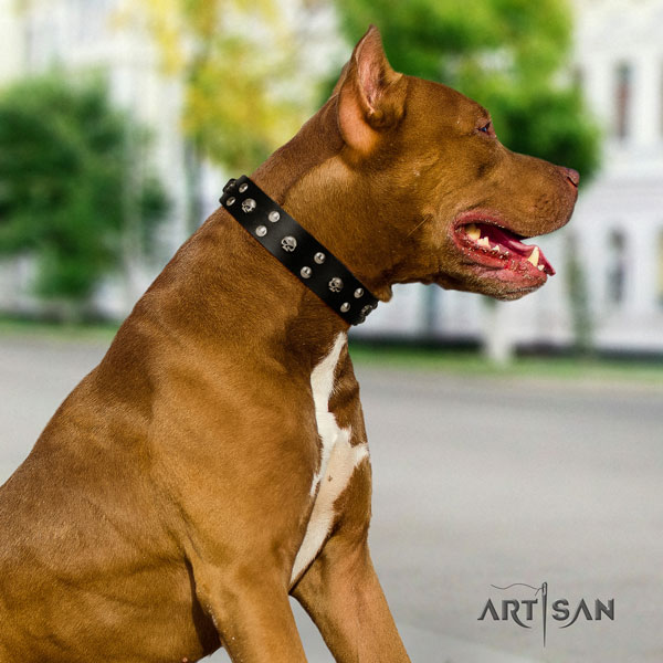 Pitbull convenient full grain leather dog collar with amazing adornments
