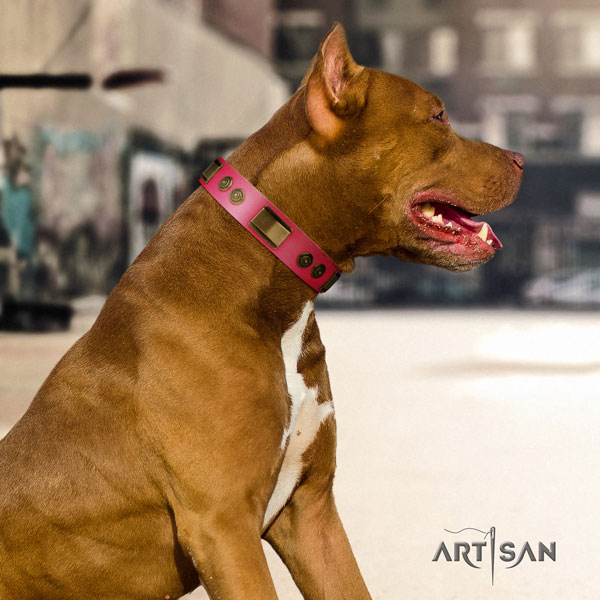 Pitbull easy wearing leather dog collar with unusual embellishments