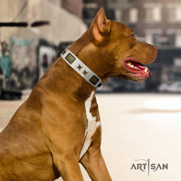 Pitbull easy wearing natural genuine leather dog collar with exceptional adornments