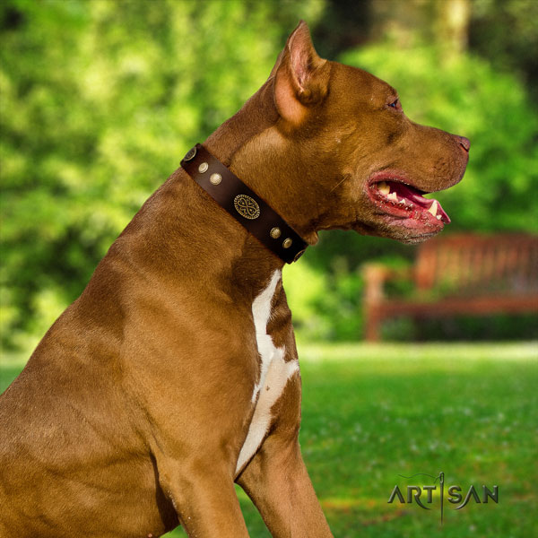 Pitbull comfortable leather dog collar with inimitable studs