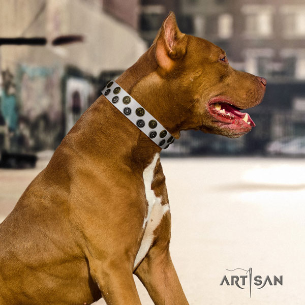 Pitbull handmade leather dog collar with exquisite studs