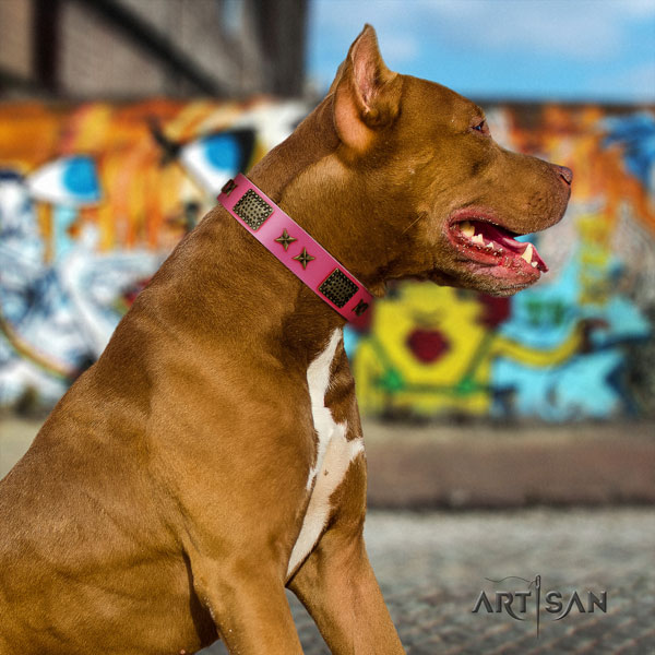 Pitbull fine quality leather dog collar with incredible adornments