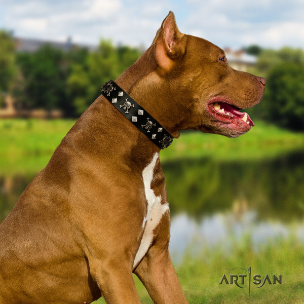 Pitbull easy adjustable full grain leather dog collar with impressive decorations