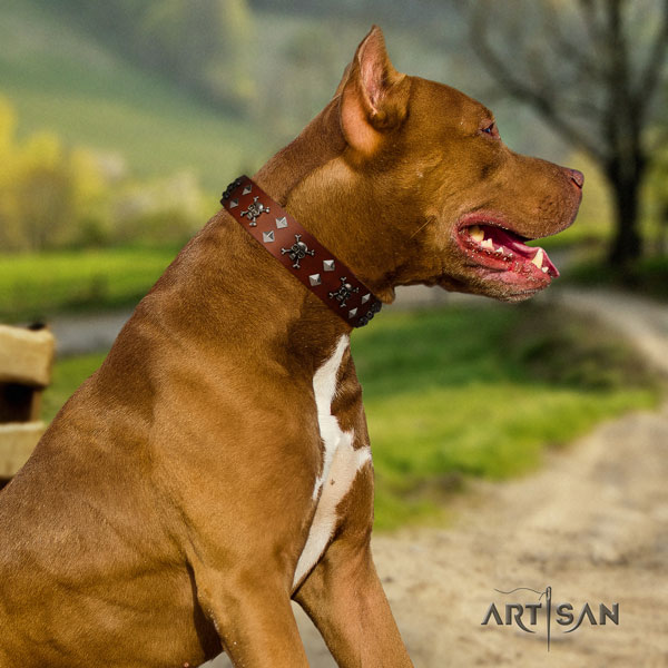 Pitbull convenient full grain leather dog collar with exceptional decorations