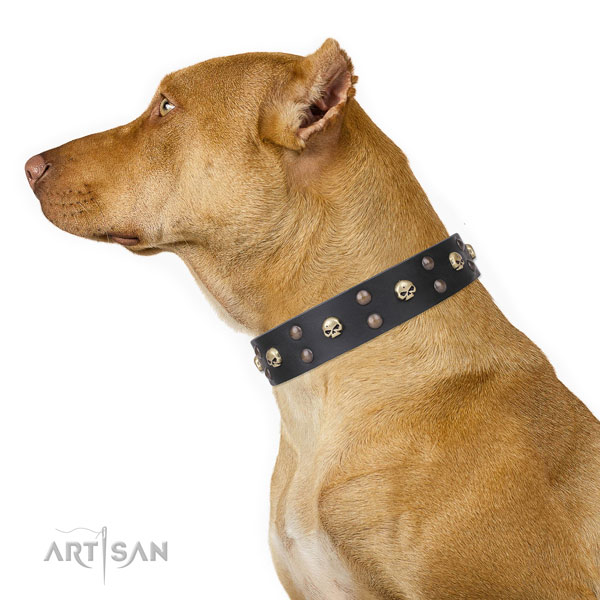 Pitbull trendy natural genuine leather dog collar for stylish walking