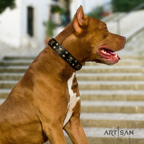 Pitbull handmade full grain natural leather dog collar with unusual studs