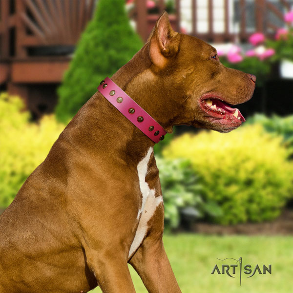 Pitbull handmade leather dog collar with amazing adornments