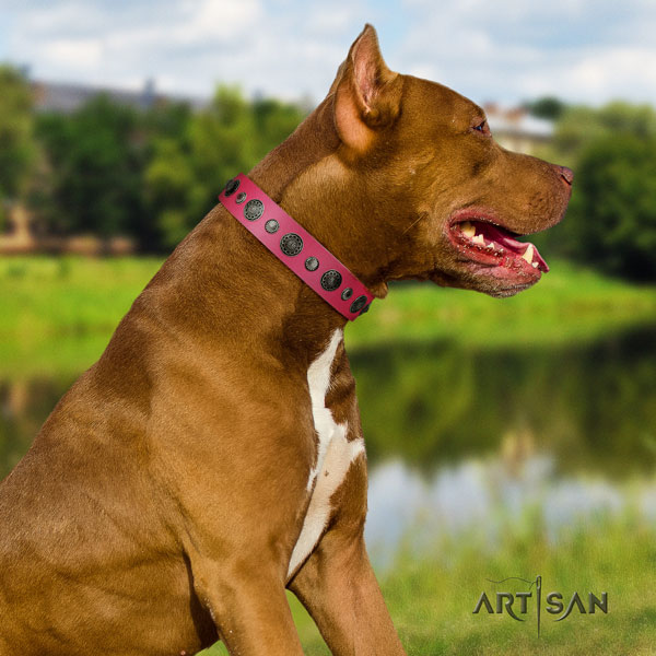 Pitbull top quality natural genuine leather dog collar with impressive embellishments