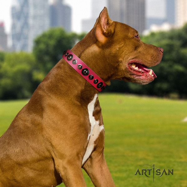 Pitbull fine quality natural genuine leather dog collar with trendy embellishments