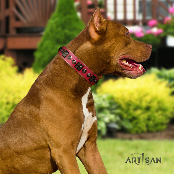 Pitbull adjustable natural genuine leather dog collar with significant adornments