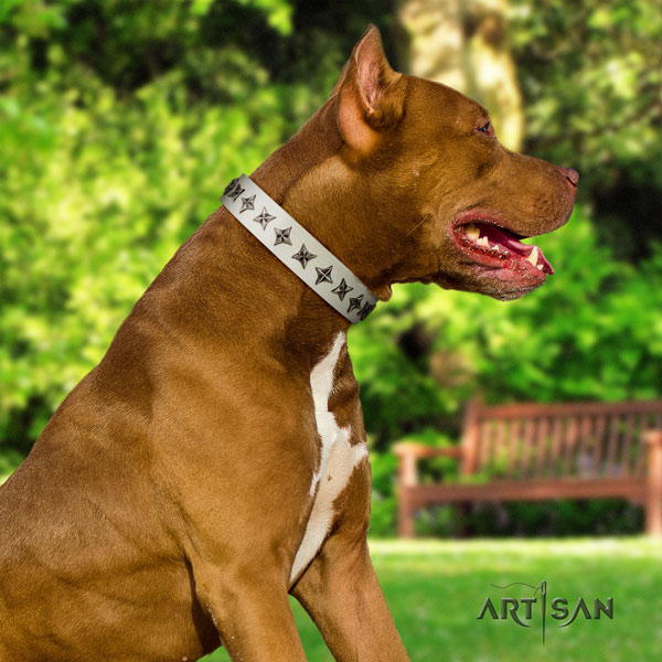 Pitbull perfect fit full grain leather dog collar with stunning embellishments