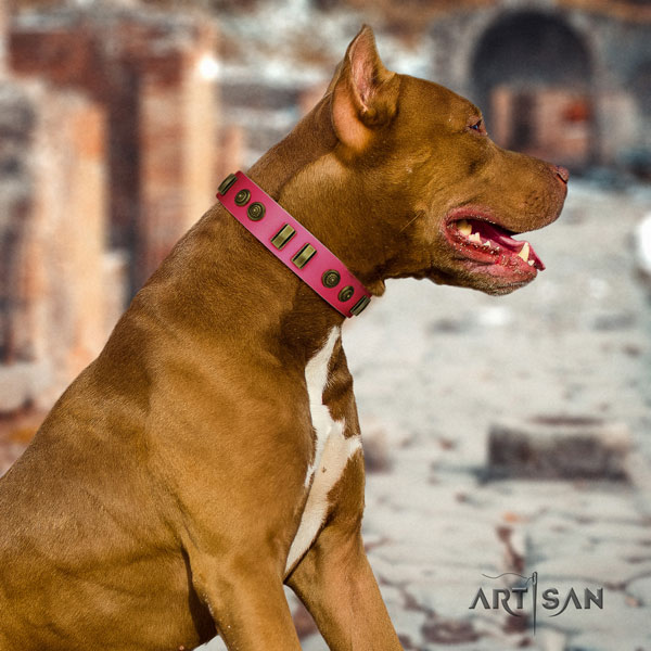 Pitbull easy adjustable full grain leather dog collar with trendy embellishments