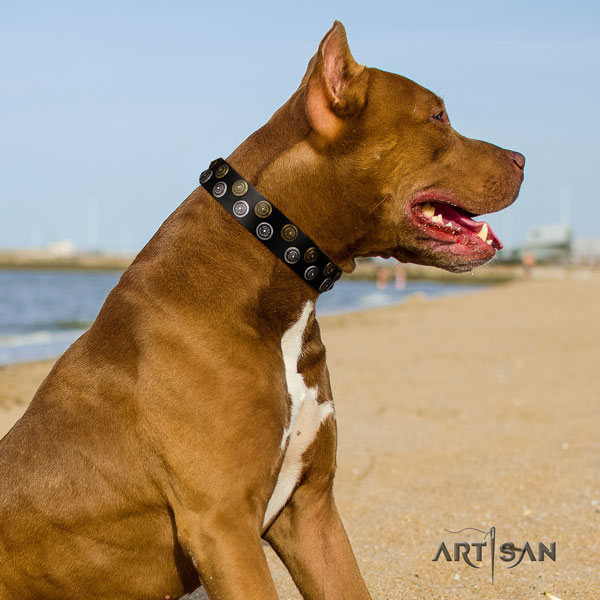 Pitbull easy wearing full grain natural leather dog collar with significant decorations