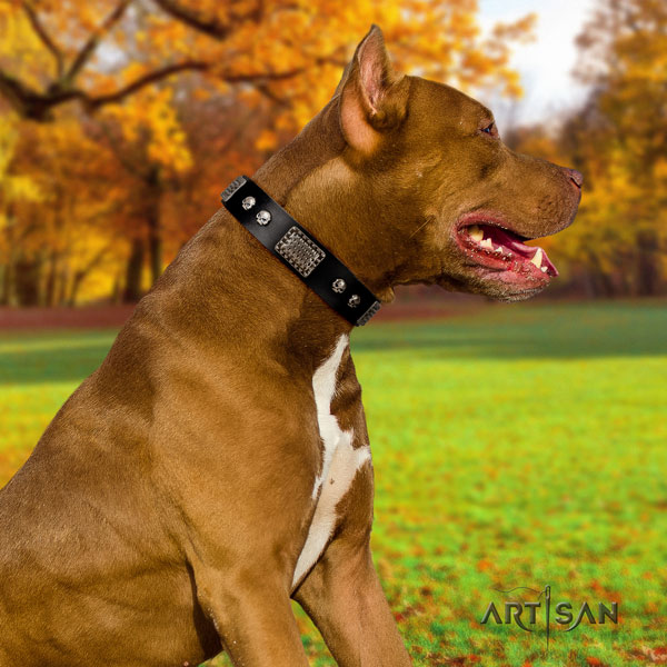 Pitbull easy wearing genuine leather dog collar with top notch decorations