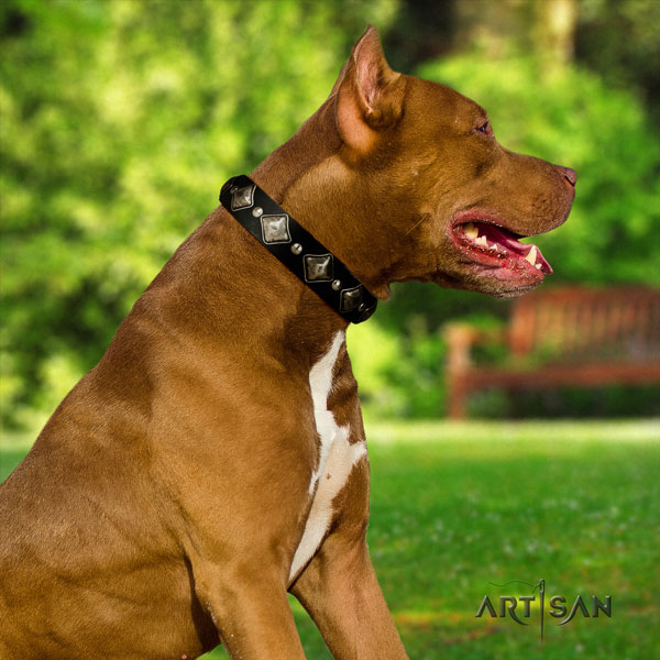 Pitbull fine quality leather dog collar with remarkable decorations