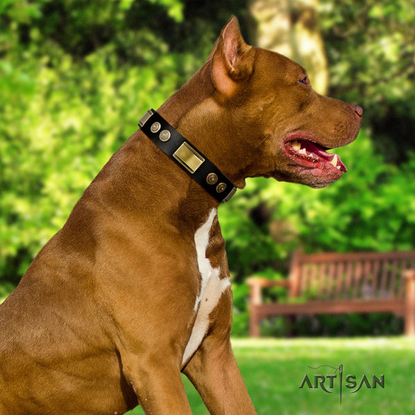 Pitbull easy adjustable full grain genuine leather dog collar with stylish studs