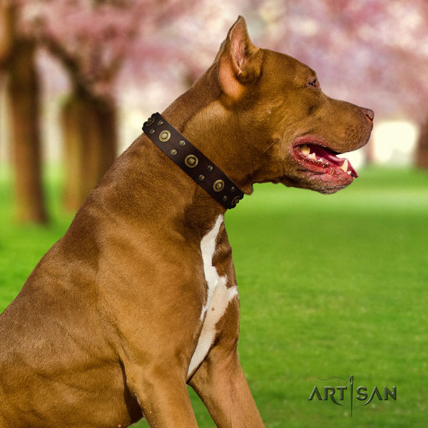 Pitbull handmade full grain natural leather dog collar with exquisite decorations