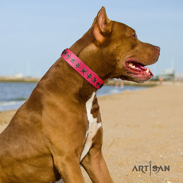 Pitbull best quality full grain leather dog collar with awesome studs
