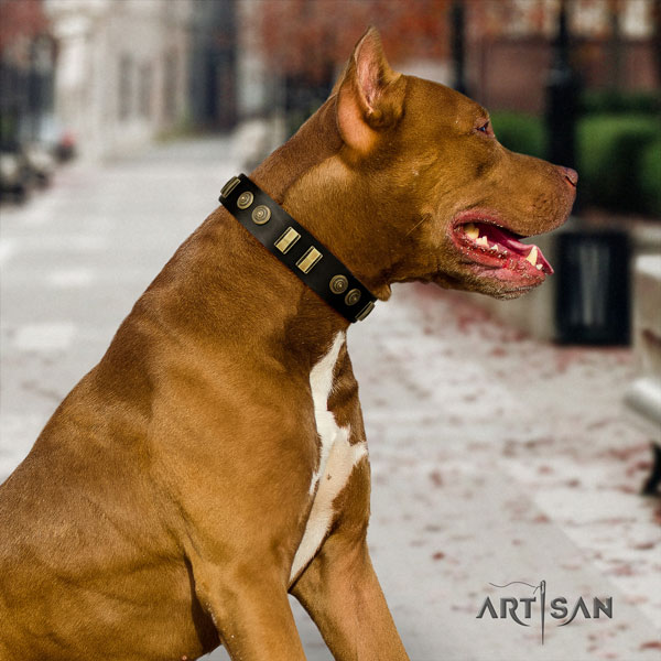 Pitbull easy to adjust genuine leather dog collar with top notch adornments