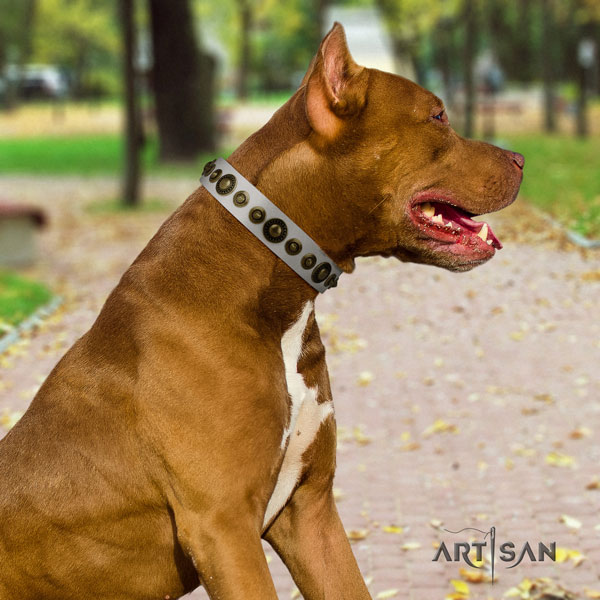 Pitbull easy wearing leather dog collar with top notch studs