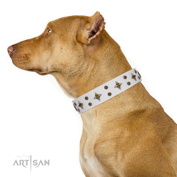 Pitbull stunning genuine leather dog collar for walking