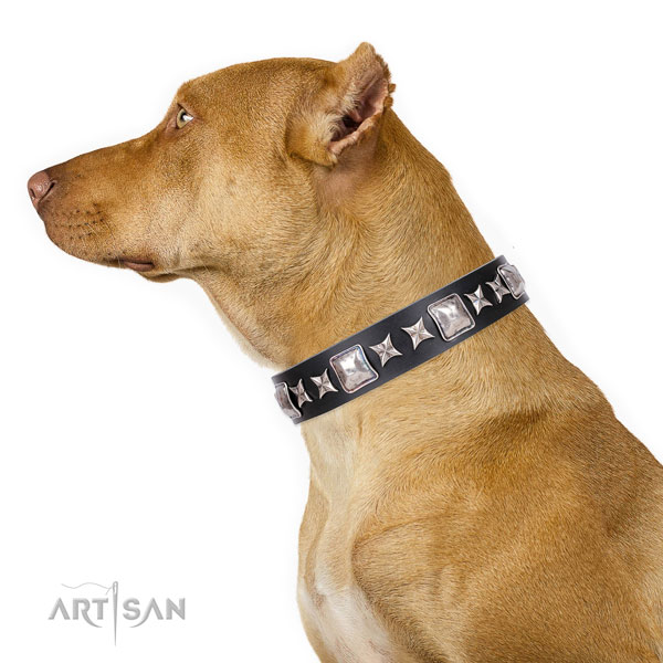 Pitbull adorned leather dog collar for fancy walking
