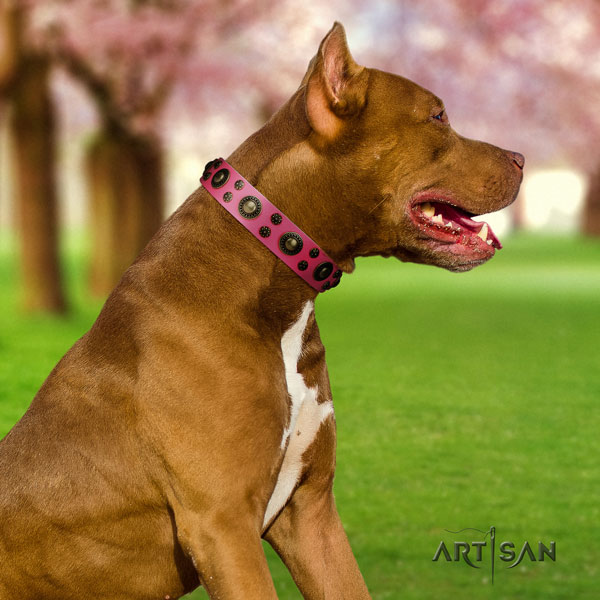 Pitbull convenient full grain natural leather dog collar with unusual embellishments