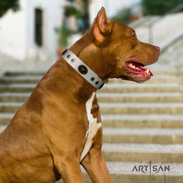 Pitbull easy to adjust natural genuine leather dog collar with top notch studs