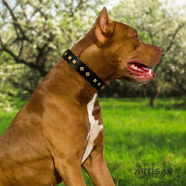 Pitbull convenient full grain natural leather dog collar with awesome embellishments