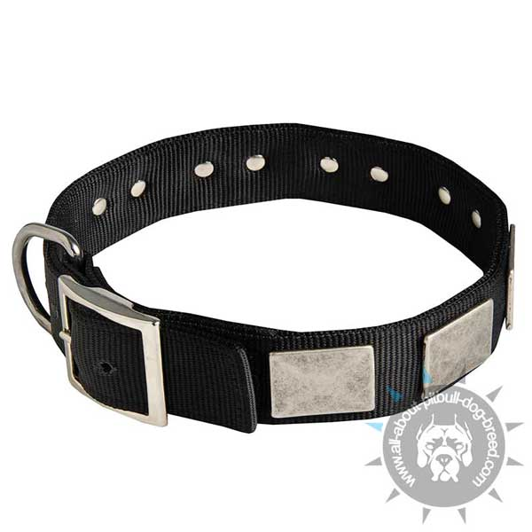 Decorated canine collar with strong D-ring and buckle