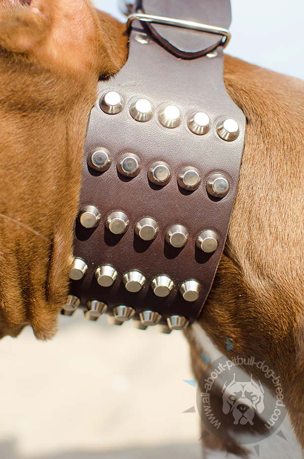 Pitbull leather collar for daily use