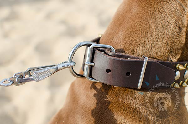 Leather Pitbull collar for daily activities